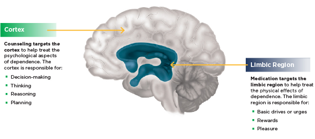 Cortex and limbic systems